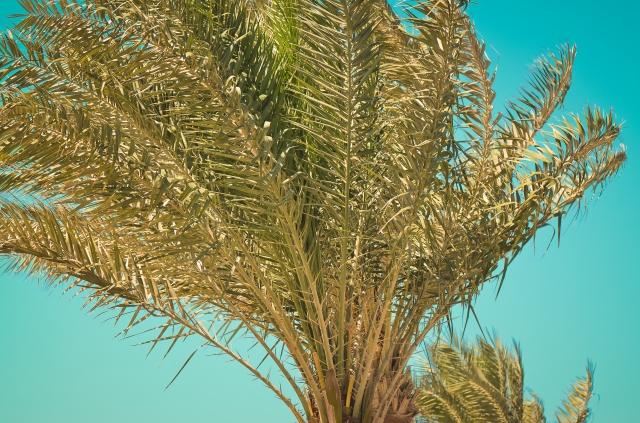 palmtree-topping